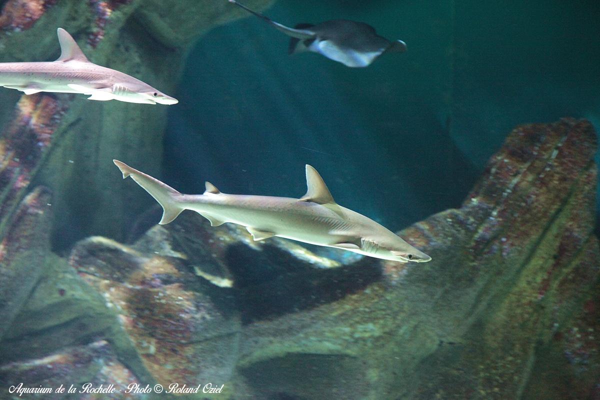 aquarium proche camping Charente Maritime