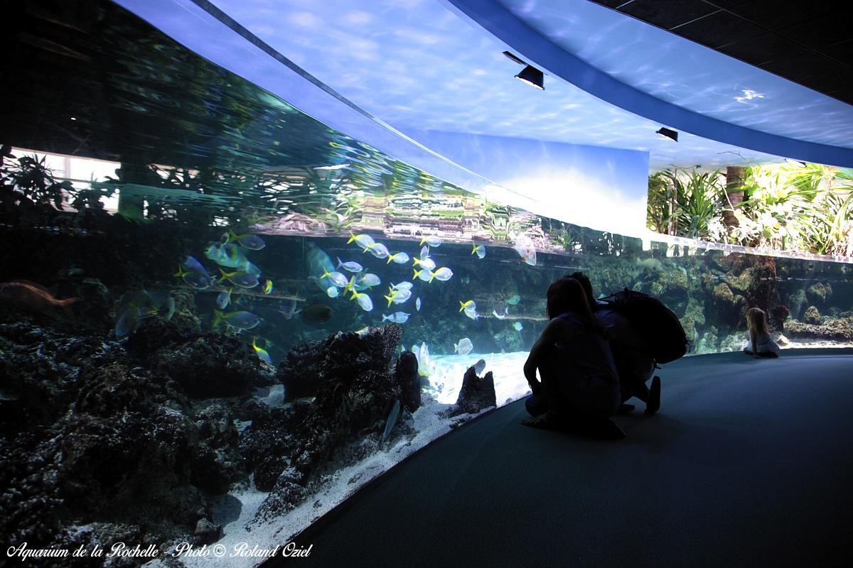 aquarium proche camping