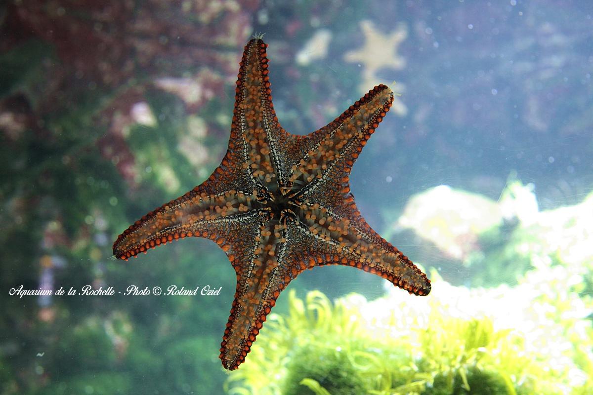 espace marine aquarium